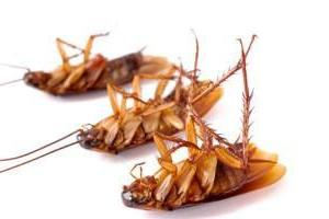 How to deal with cockroaches in an apartment folk remedies? Good advice